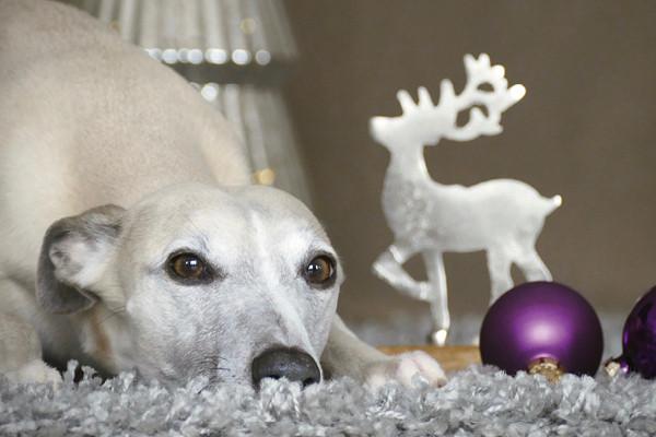 Blog_Leiky_Weihnachten