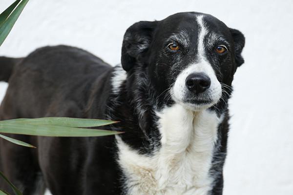 Herzprobleme-beim-Hund-Blog