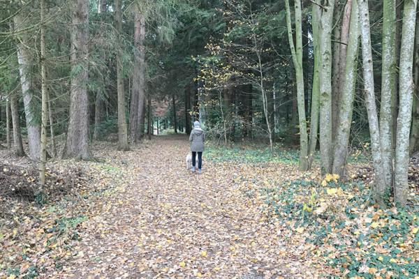 Leiky-Blog-Triftern-Lengsham_
