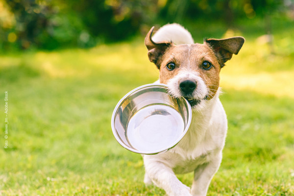 Blog_Leiky_Hundefutter_selbst-Kochen